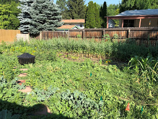 Middle of the farm, sea of vegetables and weeds