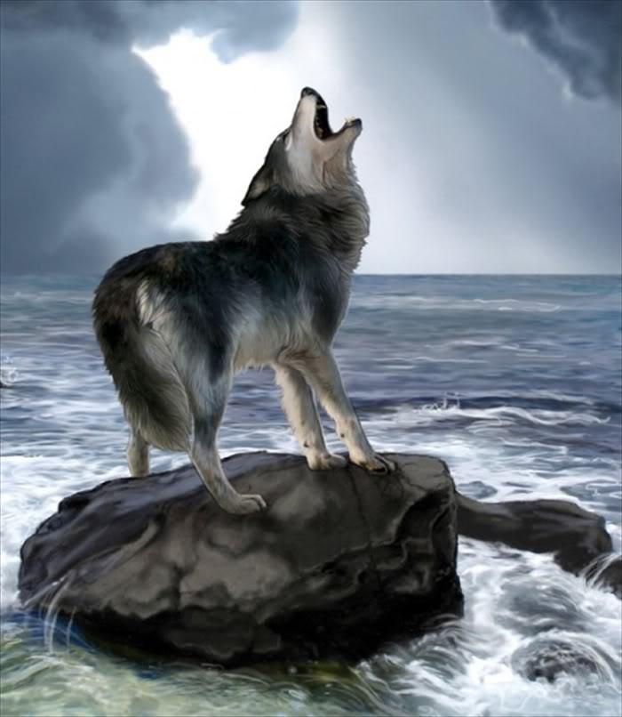 Amazing Pictures: Amazing Nature & Animal .... Digital Pictures