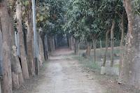 সেদিন প্রভাতে