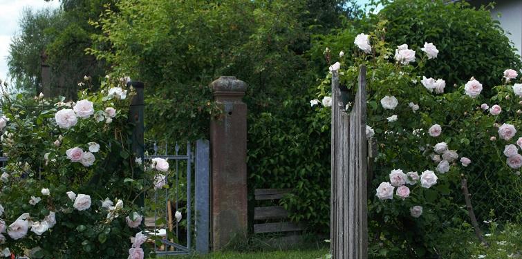 üppige Blumen im Landgarten