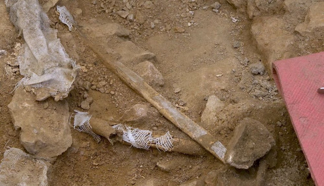Homo sapiens 'Linya' lived in the northeast of the Iberian Peninsula 14,000 years ago
