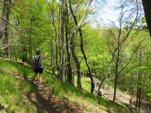 hiker on hilly trail