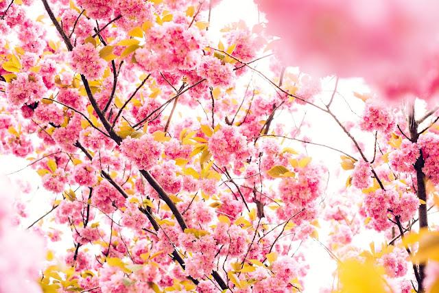 Blog It 52 | Week 3 - What is Beautiful?