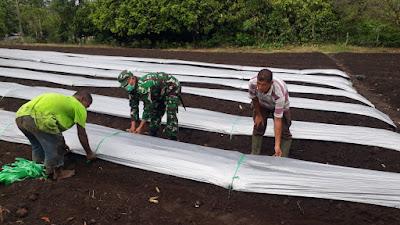 Terjun Ke Kebun, Babinsa Koramil Lembah Seulawah Beri Motivasi Petani