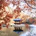 Musim gugur, saat terbaik berkunjung ke Korea