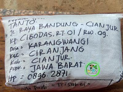 Benih pesana    TANTO Cianjur, Jabar  (Sesudah Packing)