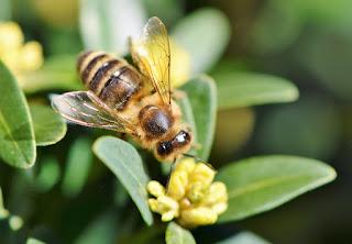 Las abejas, una sociedad fascinante