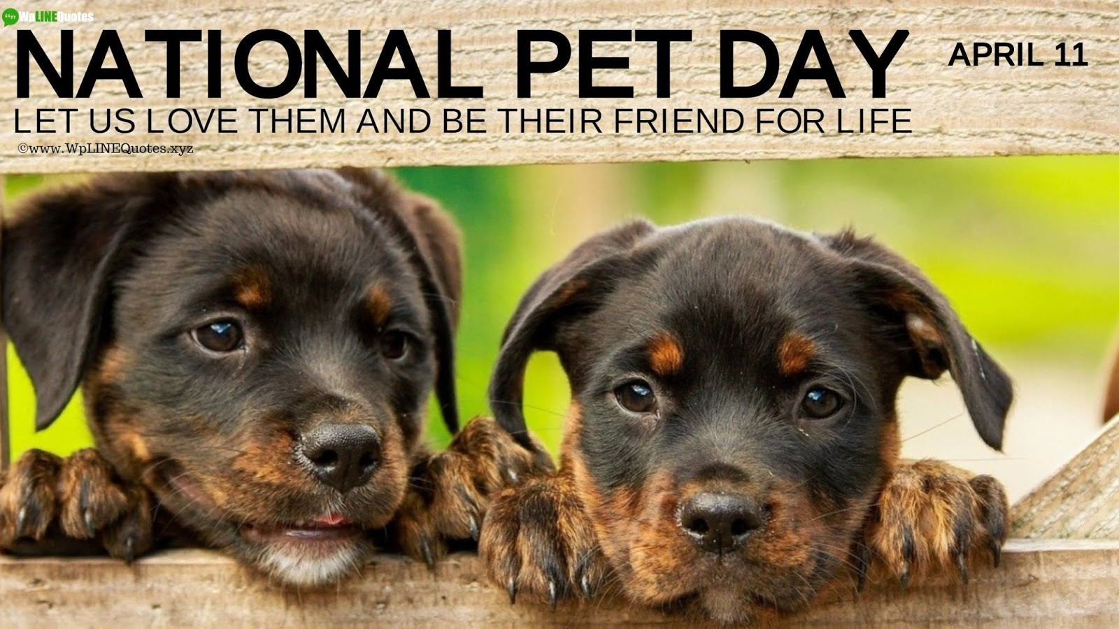 National Pet Day Quotes, Wishes, Captions, Message, Memes, Greetings, History, Facts, Images, Photos, Wallpaper