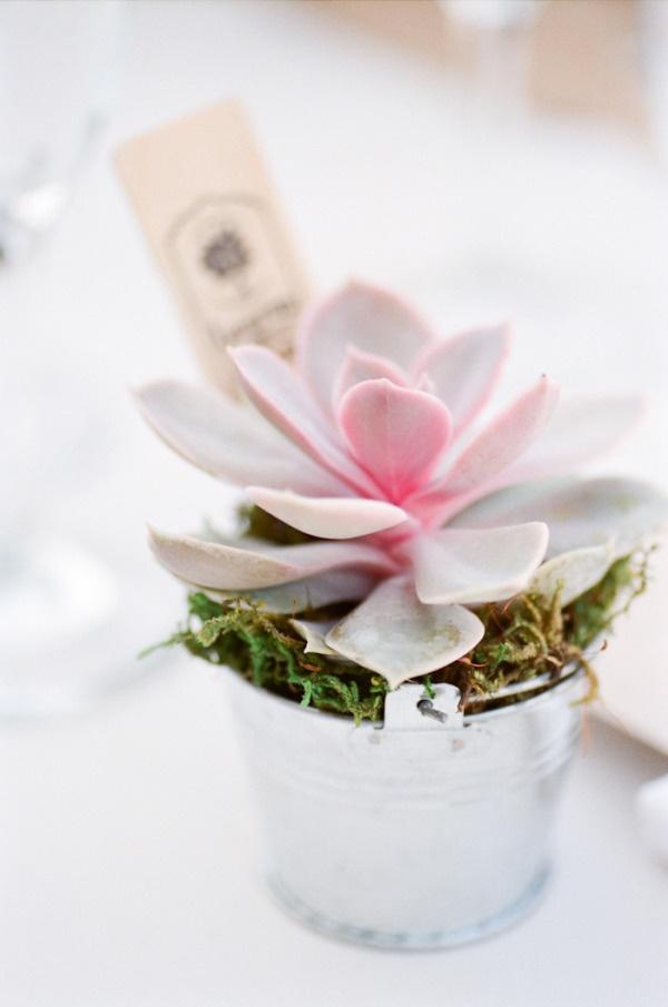 Flowers  Favors  Succulent  Pink