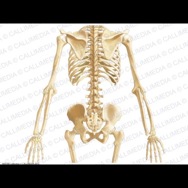 Anatomía Descriptiva: abril 2017