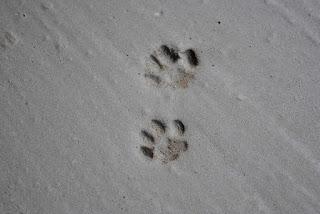 jeden krok jest lepszy niż nicnierobienie