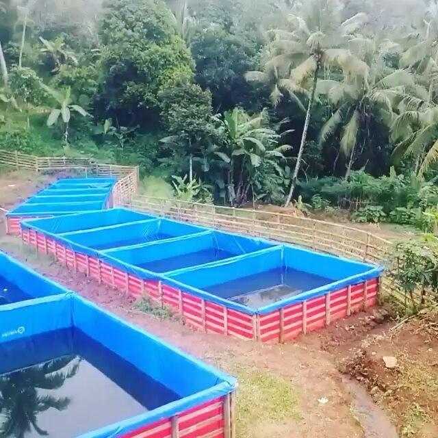 Budidaya Ikan lele pada Kolam Terpal - Jual Pompa Air ...