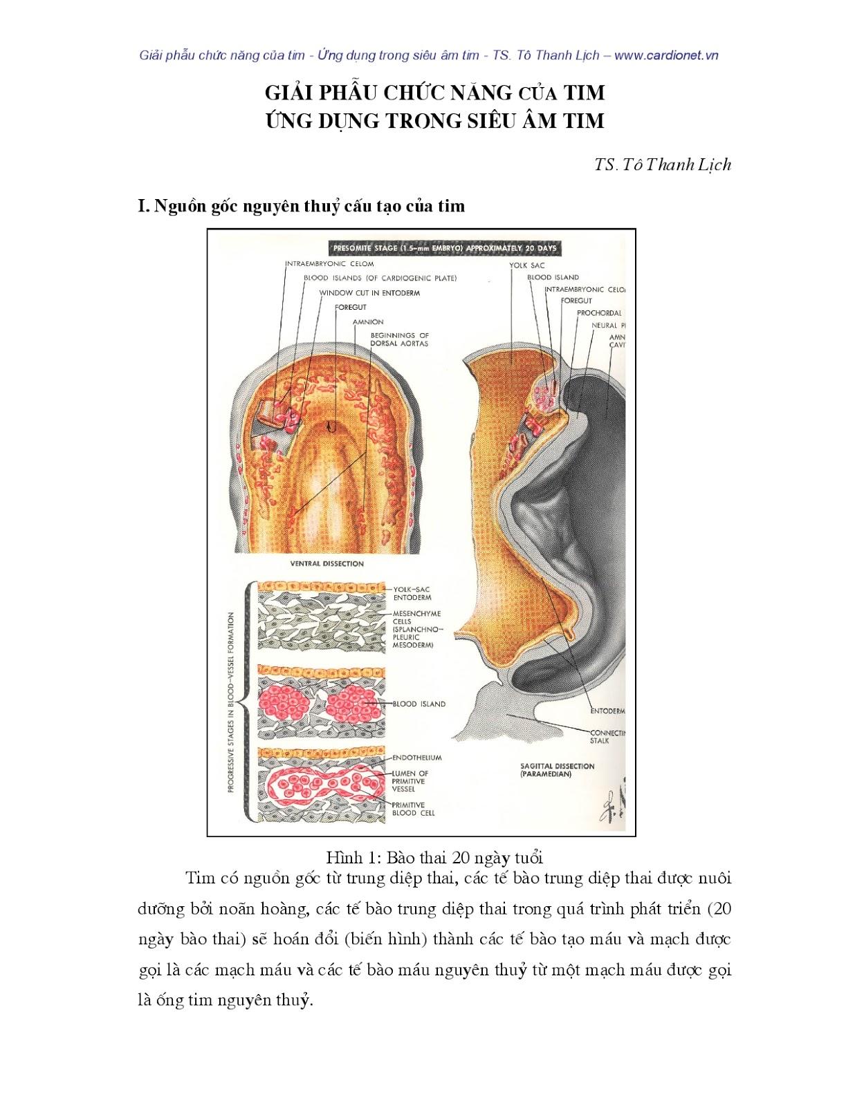 Giải phẫu chức năng của tim Ứng dụng trong siêu âm Doppler tim
