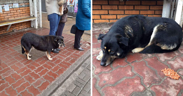 Целых 4 месяца собака ждет на остановке скончавшуюся хозяйку