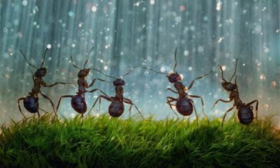 Especies de hormigas