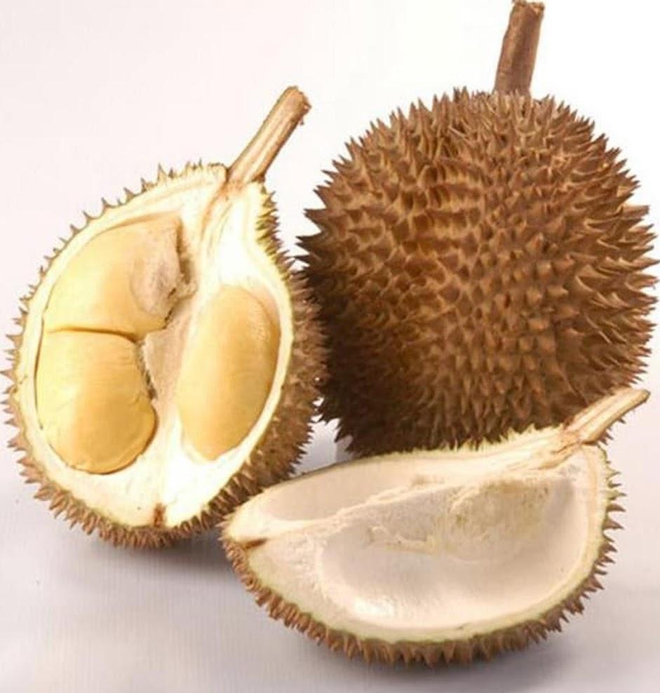 Bibit Buah Durian bawor cepat berbuah bibit durian bawor genjah bisa berbuah dalam pot Daerah Istimewa Yogyakarta