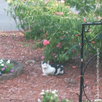 Mystic Elsie Sitting in My Front Yard Garden in Leesburg, Florida