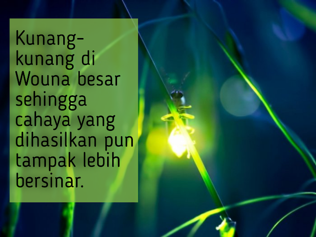 Kunang kunang sebagai destinasi wisata hijau di papua