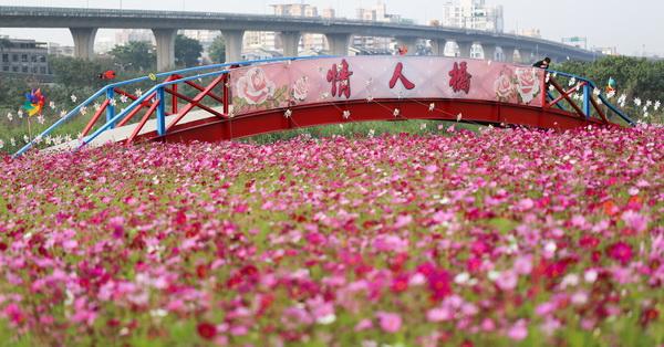 《台中.大里》2018大里溪畔4公頃花海,春節走春好去處