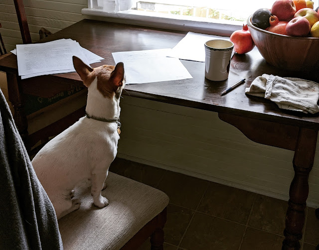 A dog sits on a chair in front of a table with pages scattered next to a pen and a bowl of fruit