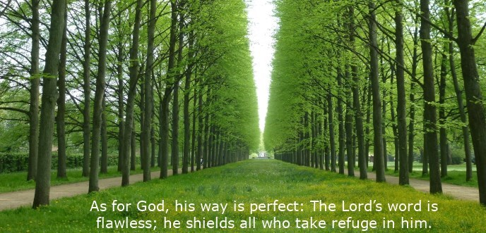 As for God, his way is perfect: The Lord's word is flawless; he shields all who take refuge in him.