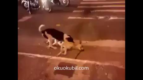 Bir köpeğin Çaresizliği-İnsanlığın Öldüğü An.