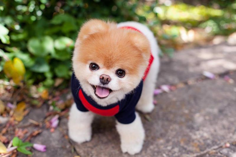 Cute Dog images of National Dog day 2019