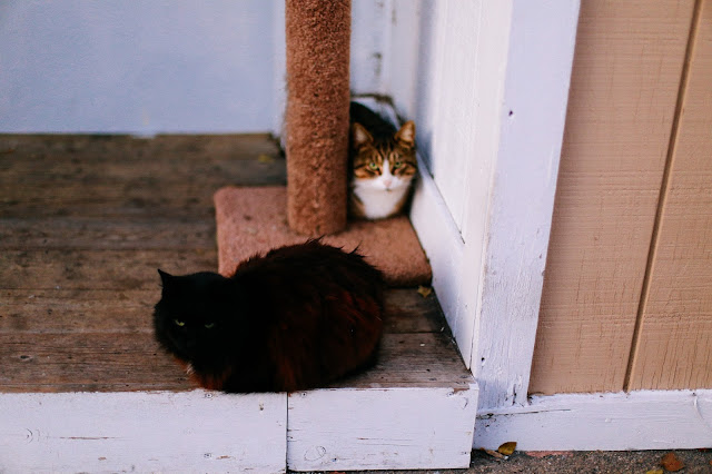 black and white stray cats