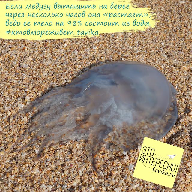 медуза на 98% состоит из воды