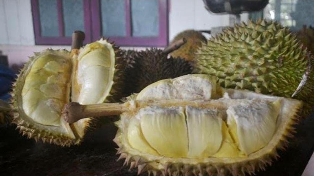 Bibit Durian Montong Papua Barat