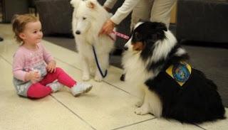 La forma de evitar que los perros sean ásperos con los niños
