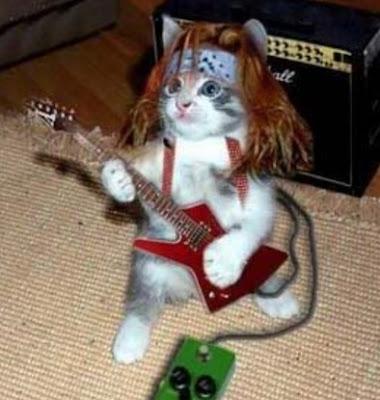 gambar unik kucing roker
