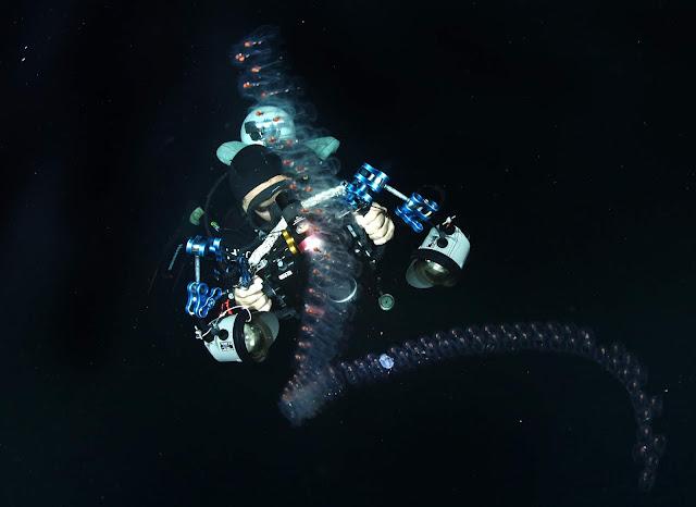 Scuba Diving, Underwater Photography, Blackwater, Jun V Lao, PaparazSea
