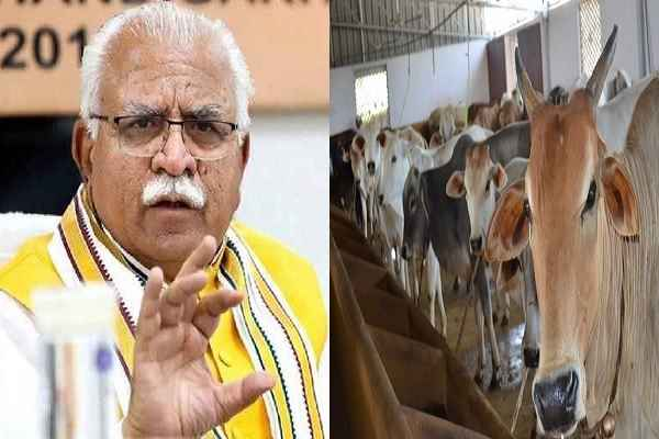 how-to-increase-income-in-dairy-industry-haryana-schemes