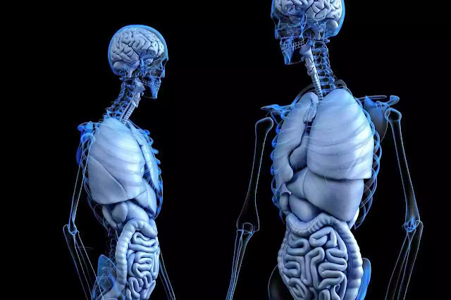 Amazing-Facts-about-Human-Body-in-Marathi