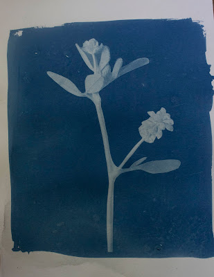 A cyanotype print of a flower and a blurb about Anne Frank, a diary and her birthday