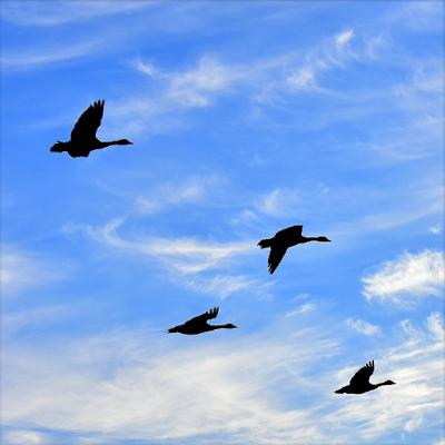 Kredit foto: Pixabay.com