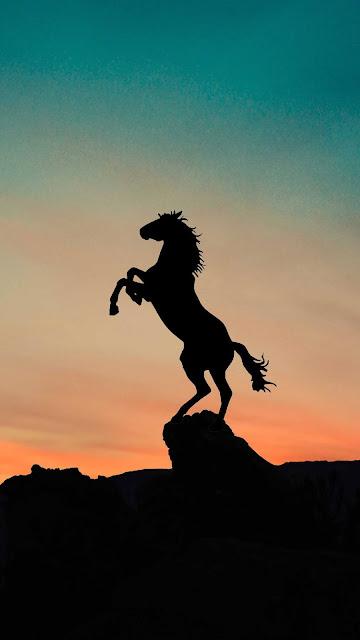 horse wallpaper for phone