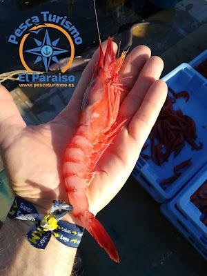 IMG 20191227 WA0012 - El Paraiso y la gamba roja del Grau de Castelló una pesca sostenible, sin descartes y con futuro