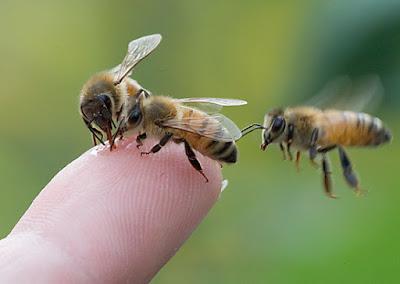Συνάντηση Μελισσοκομικών Συλλόγων με θέμα το παρόν και το μέλλον της Ελληνικής Μελισσοκομίας