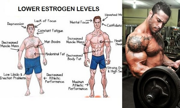 how to lower your estrogen levels for men