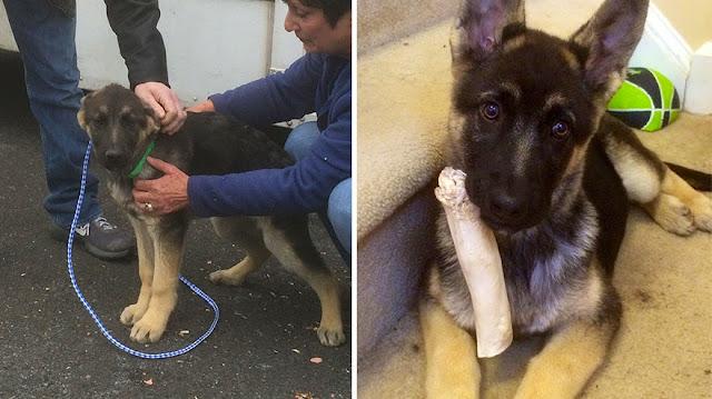 Fotos de mascotas un día antes y después de ser adoptadas
