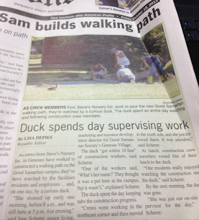 duck watches workmen dig new footpath