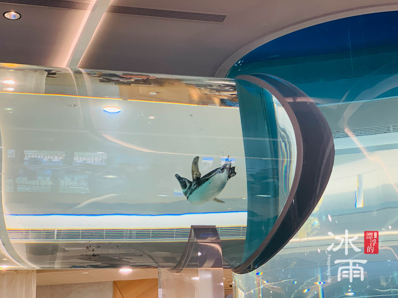 Xpark水族館|Xcafe