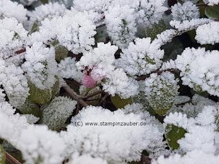 Winterimpressionen Fotograf (C) Silvi Provolija