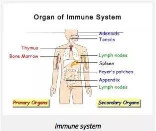 Struktur sistem kekebalan tubuh-1