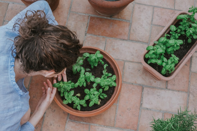 a lady handling a pot of mint plant