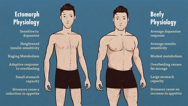Ectomorphs Training - Training And Diet For Skinny -8144