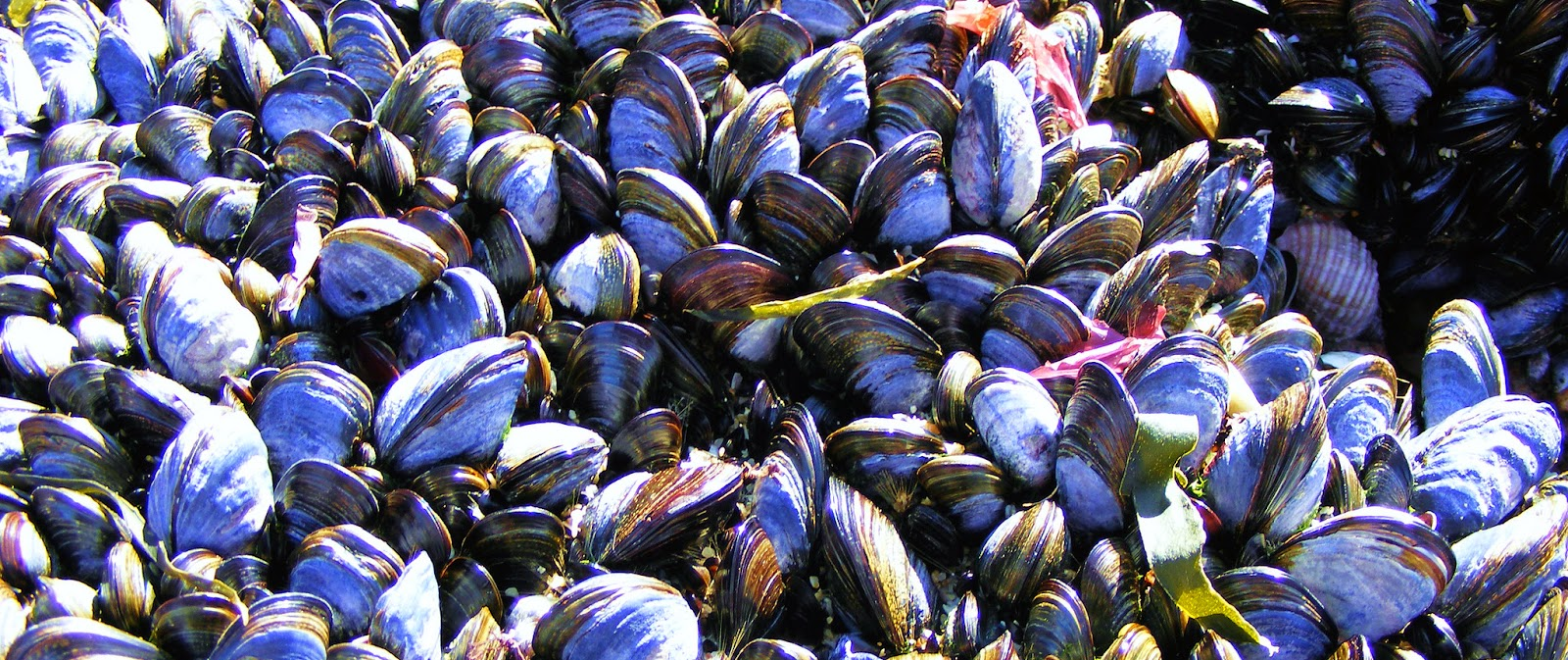 How Do Mussels ...