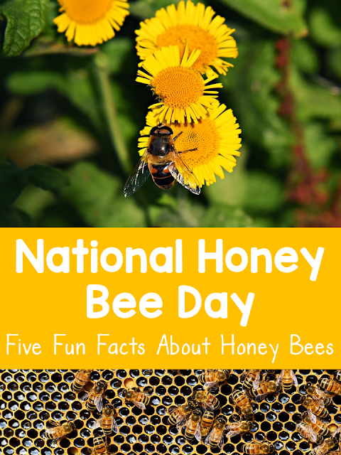 Learn about honey bees, why they are important, and how we can help them with these five fun facts!